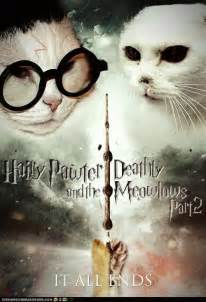 harry potter cat 1000 ideas about harry potter