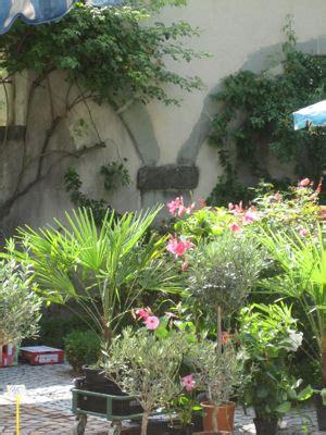 marche de noel fleur et plante du lac maison design foofaq