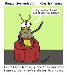 Fruit Fly Cartoon