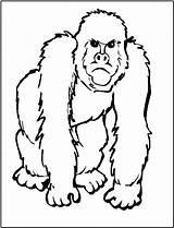 Gorilla Coloring Animals Pages Animal African Ape Zoo Printable Templates Printables Clipart Five Clip Safari Sheets Face Fun Monkey Clipartpanda sketch template