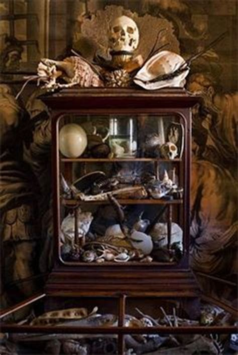 cabinet de curiosit 233 on cabinet of curiosities taxidermy and history