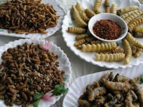 insect farming addresses food and feed security un wadsam