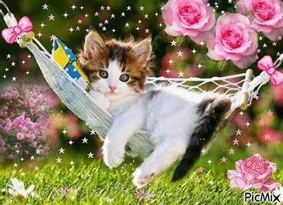 Picmix Cat Animals Cats
