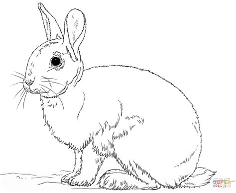Drawn Rabbit Coloring Page