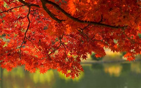 Hd Autumn Background by Wallpapers Fall Leaves Wallpaper Cave