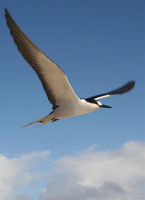 Seabird Wikipedia