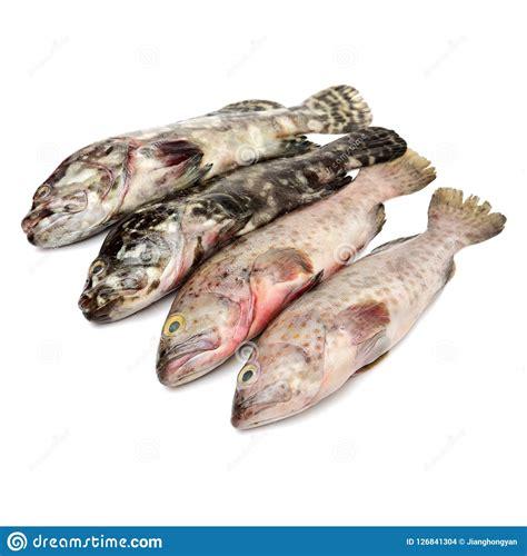 fish grouper seafood isolated cernia frutti pesce mare della