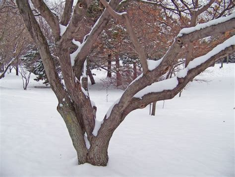 bud tree  stock     stock