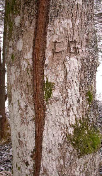 vady dreva
