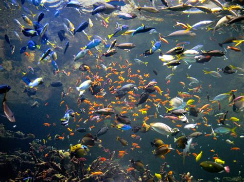 all marine all aquarium all fish aquarium 2017 fish tank maintenance