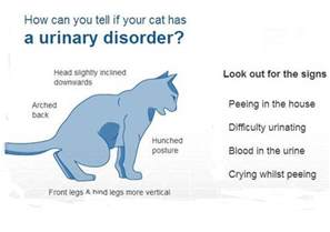 cystitis in cats how do you deal with a cat that urinates inappropriately