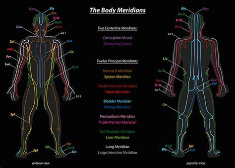 meridien du corps humain les m 233 ridiens en kin 233 siologie sobre kinesiolog 237 a