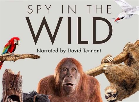 spy   wild tv show season  episodes list