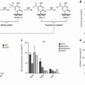 pdf 5 formylcytosine can be a stable dna modification in With stable 5v from old cells