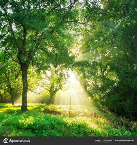 Green Forest Image by Green Forest Background Morning Season