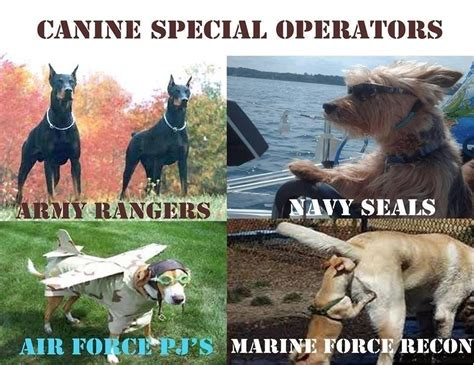 11 Military Dog Memes That Are Flat Out Funny Af We Are