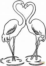 Flamingo Flamingos Cif sketch template