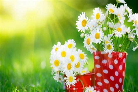 Wonderful Flowers 3d Screensavers