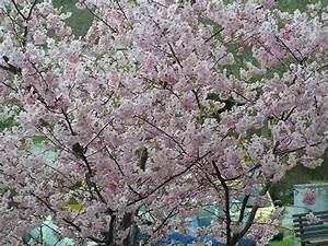 Baum Kleiner Garten : kleiner baum mein sch ner garten forum ~ Orissabook.com Haus und Dekorationen