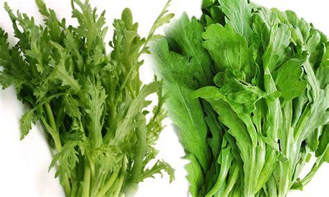ประโยชน์ของผักตั้งโอ๋ ผักขี้ควาย กินบ่อยๆช่วยต้านมะเร็ง บำรุงตับและม้าม - โลกลี้ลับ