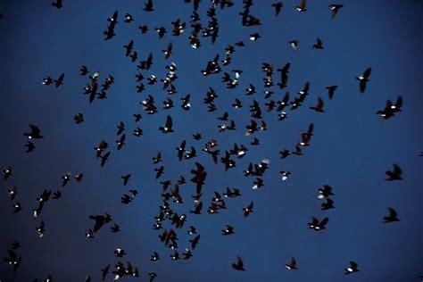 Artist Straps Lights Onto Legs Of 2,000 Birds For Art