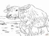 Coloring Water Buffalo Pages Printable Supercoloring Drawing Drawings Main Buffaloes Skip Paper Categories sketch template