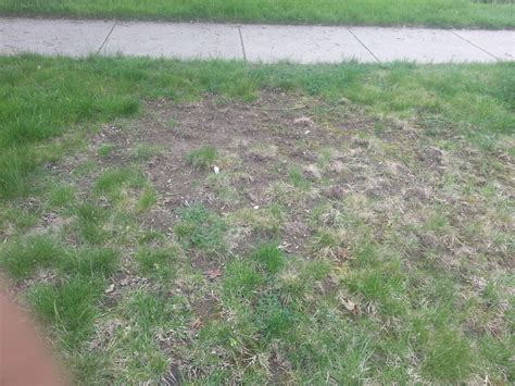 how do i fix the worst lawn on the