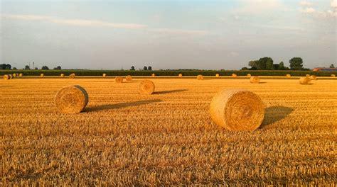 azienda agricola la fiorita immagini co azienda agricola grano prateria