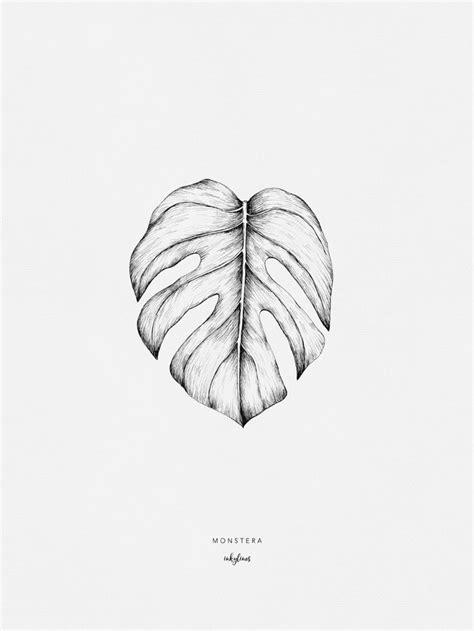 Monstera | Leaf drawing, Leaves sketch, Plant sketches