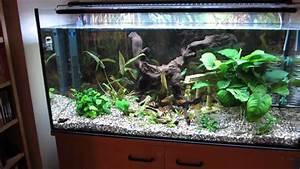 Aquarium Led Beleuchtung : aquarium led beleuchtung s wasser youtube ~ Frokenaadalensverden.com Haus und Dekorationen