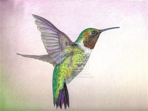 hummingbird in colored pencil by maribel gnlz deviantart