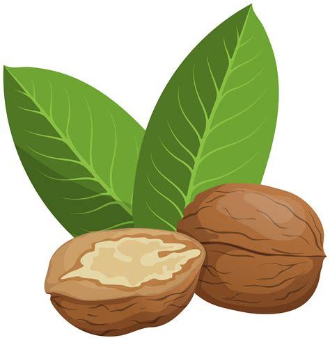 walnuts png clip art  web clipart