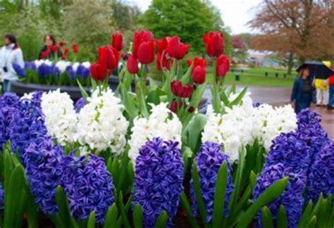 все садовые цветы молочай фото