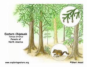 Chipmunk Den Diagram