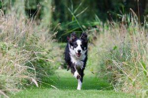 wilderness hundefutter im aktuellen test alle vor und