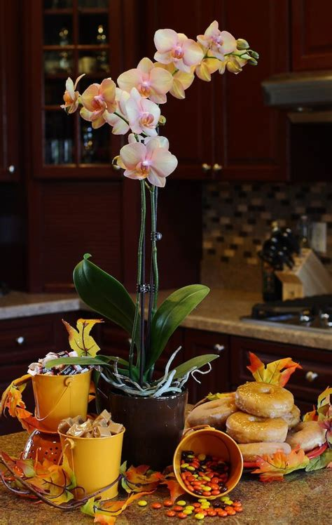 what to do when your orchid flowers fall 87 best images about just add ice orchids on pinterest orchid care growing orchids and