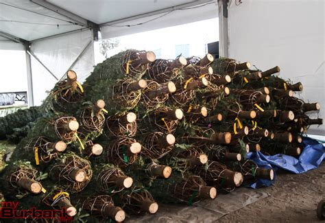 ymca tree lot ready for sales in new north hollywood