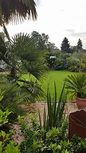 Trachycarpus Fortunei Auspflanzen : palmen im ruhrgebiet die 2 if you think about palm trees ~ Eleganceandgraceweddings.com Haus und Dekorationen