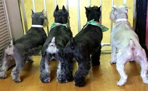 dogs hairdown  barkpost