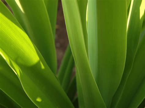 vista gruenen pflanze hintergrundbilder vista gruenen