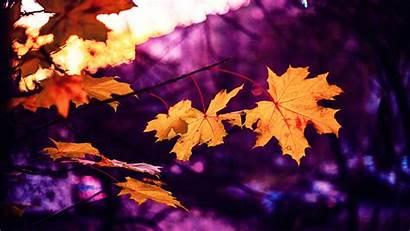Leaves Maple Autumn Blur 4k Background Uhd