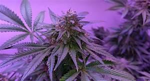 Independent Voters Support Marijuana Legalization ...