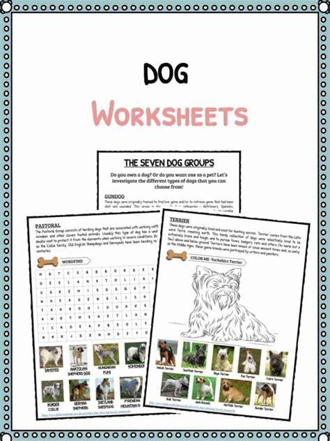 dog facts information worksheets  kids breeds