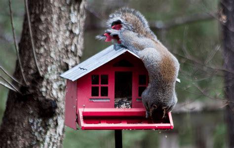 Top Three Best Squirrel Proof Bird Feeders In 2015