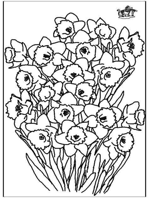 Kleurplaat Narcis by Narcis Kleurplaten Bloemen