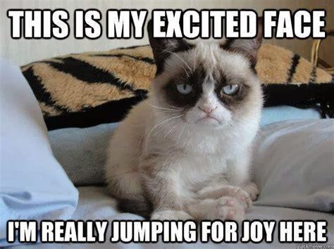 Joy Meme - caterville grumpy cat memes