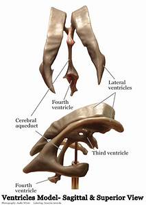 Models - Nervous System