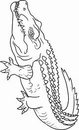 Crocodile Coloring Pages Animals Crocodiles Animal Outline Drawing Alligators Print Sheets Getdrawings Python Lemur sketch template