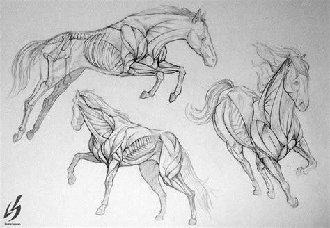 horse anatomy  laurabevondeviantartcom cg anatomy