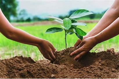 Trees Plant Ireland Planting Climate Million Change